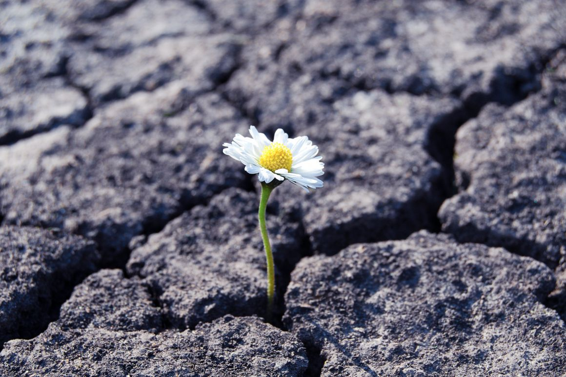 How To Support Mental Health and Build Resilience